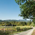 Wines of British Columbia's photo
